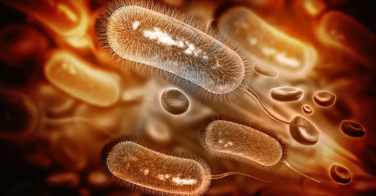 الجرثومة الحلزونية حقائق مهمة ويب طب