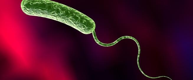 بكتيريا الدم: أسبابها ومخاطرها