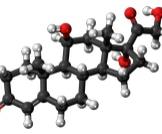 ما هو الكورتيزون الطبيعي وما هي مصادره؟