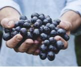 عصير العنب الطازج