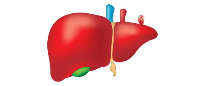 وظائف الكبد: ما هي؟