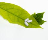 علاج البهاق بالأعشاب