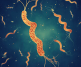 معلومات عن الميكروب الحلزوني