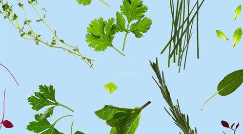 فوائد الأعشاب المجففة والورقية