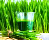 فوائد عصير عشبة القمح