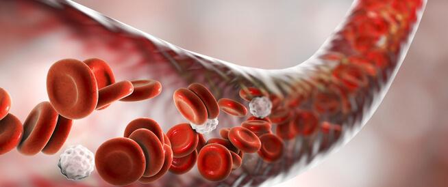 مكونات الدم ووظيفة كل منها: معلومات أساسية