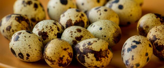 فوائد بيض السمان: تعرف عليها