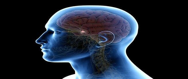 ما هي الغدد الصماء وأبرز وظائفها وأمراضها؟