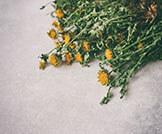هل يمكن علاج الأكزيما بالأعشاب؟