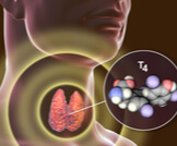 ما هو هرمون ثيروكسين؟