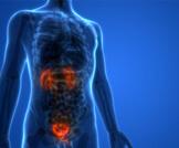 ارتجاع البول: حالة تصيب الجهاز البولي