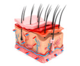 ما هي طبقات الجلد؟
