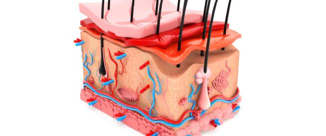ما هي طبقات الجلد وما وظائفها؟