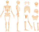 ماذا تعرف عن العظام؟