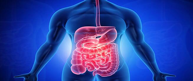 أعضاء الجهاز الهضمي