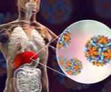 ما هو التهاب الكبد الوبائي ب الخامل؟