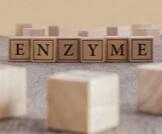 ما هي الإنزيمات؟