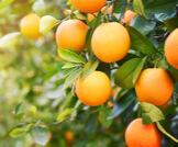 المعادن والفيتامينات في البرتقال