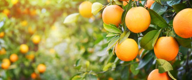 المعادن والفيتامينات في البرتقال: عديدة وهامة