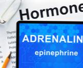ما هو الفرق بين الأدرينالين والإبينفرين؟