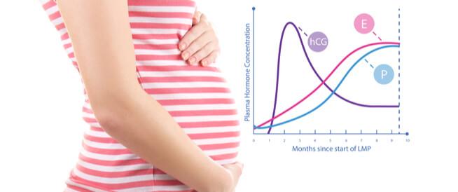 جدول نسبة هرمون الحمل: ماذا تعني الأرقام