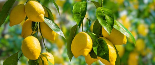 تعرف على فوائد ورق الليمون