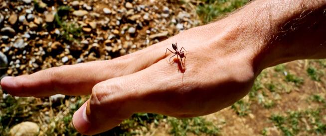 حساسية النمل: دليلك الشامل