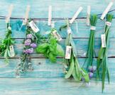 فوائد الأعشاب الطبيعية للجسم