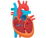 عملية ثقب القلب عند الرضع والأطفال