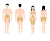 معلومات عن توزيع الدهون في الجسم