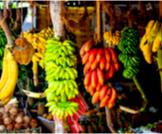 أنواع الموز وفوائده