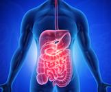 تعرف على طول الأمعاء في جسم الإنسان