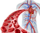 كم تبلغ كمية الدم في جسم الإنسان؟