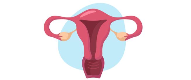 الرحم المزدوج: حالة غريبة ونادرة