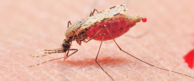 أساليب الوقاية من حمى الضنك