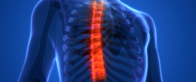 أهم المعلومات عن الفقرات الصدرية