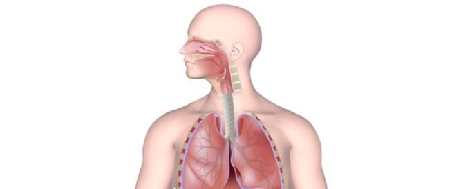 ما هي مكونات الجهاز التنفسي ويب طب