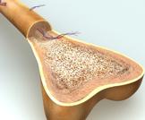 أعراض فشل النخاع العظمي