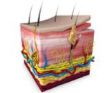 الغدد الدهنية في الجسم