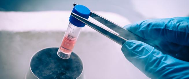 أنواع الخلايا الجذعية
