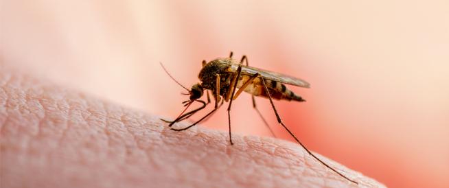 أنواع الملاريا: تعرف عليها