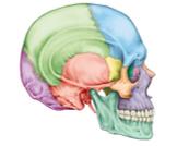 عظام الجمجمة