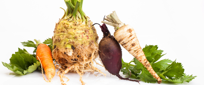 الخضروات الجذرية: أنواعها وفوائدها