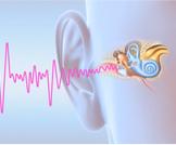 أبرز المعلومات عن العصب السمعي