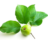فوائد ورق التفاح