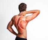 أنواع العضلات ووظيفتها