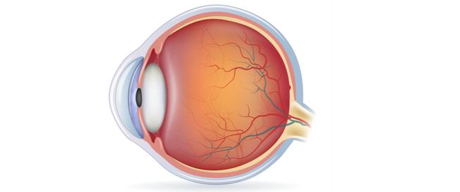 أجزاء العين الخارجية ووظائفها