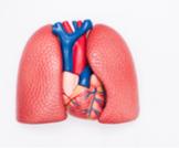 ضمور الرئة: أسباب وأعراض وعلاجات