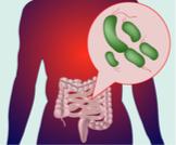 نقص البكتيريا النافعة: مخاطر وطرق علاجها
