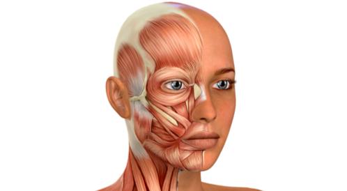 ضمور عضلات الوجه